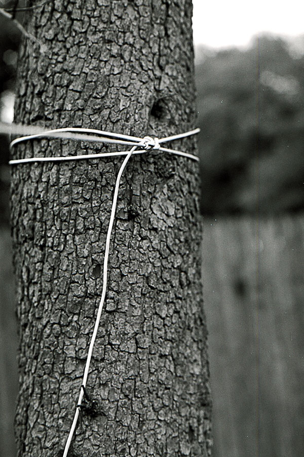 Clothesline tied to a tree