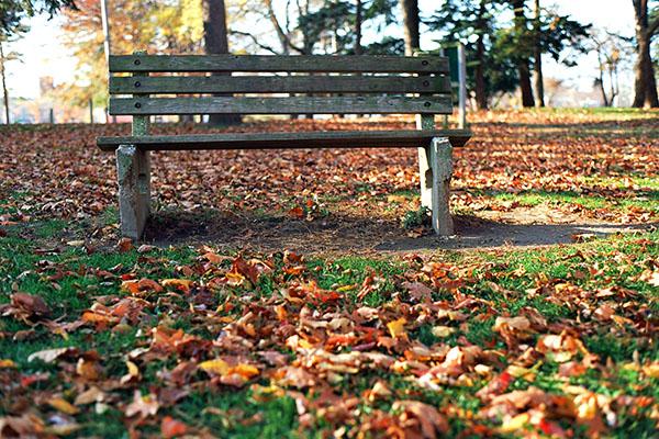 Austin Park Bench