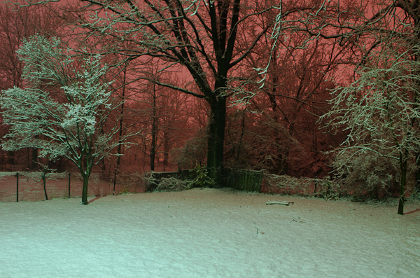 Snowy Night in My Back Yard