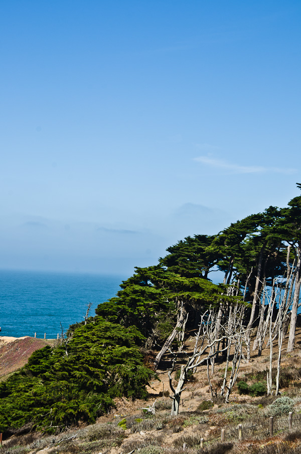 Trees over the Pacific